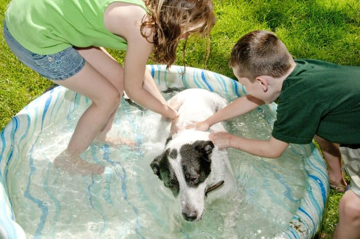 5 Hard Plastic Kiddie Pools For Kids And Dogs